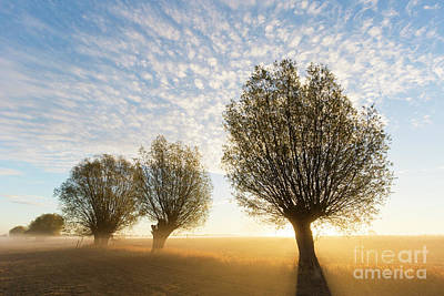 Photograph - Willows At Sunrise by Arterra Picture Library