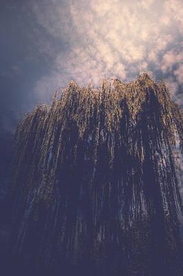 Photograph - Willows by Gazali