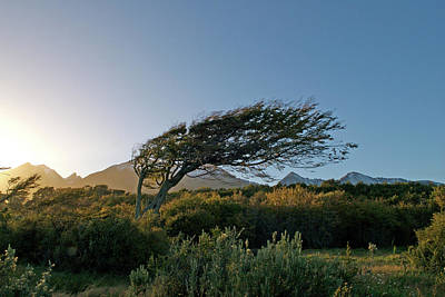 Photograph - Wind Blown by Mark Duehmig