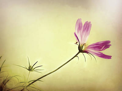 Photograph - Wind Flower by Bob Orsillo