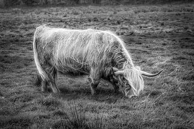 Photograph - Windblown In Scotland Black And White by Debra and Dave Vanderlaan