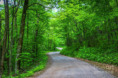 Photograph - Winding Summer Road by Tom Claud