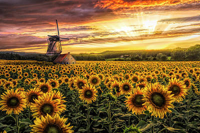 Photograph - Windmill In The Sunflower Fields In Hdr Detail by Debra and Dave Vanderlaan