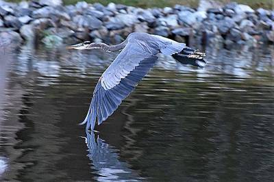 Photograph - Wing Touching Water by Kim Bemis