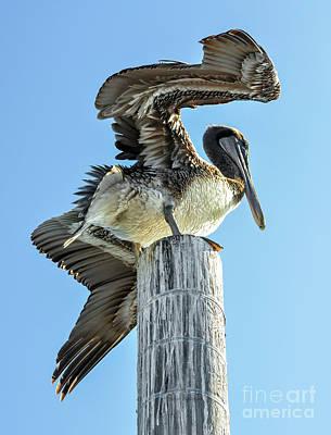Wings Of A Pelican Art Print