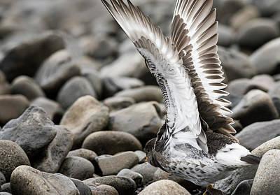 Photograph - Wingspan by Robert Potts