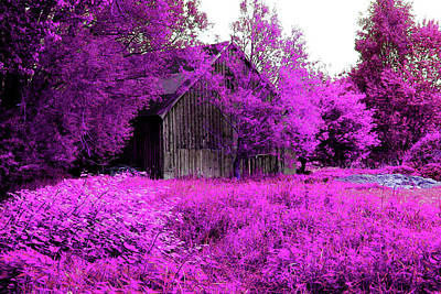 Photograph - Winsen Luhe - Old Wooden Hut In The Pink-purple Meadow by Patricia Piotrak