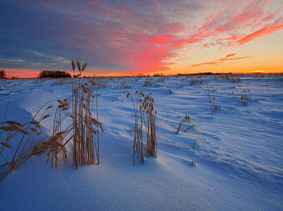 Photograph - Winter Barley by Dan Jurak