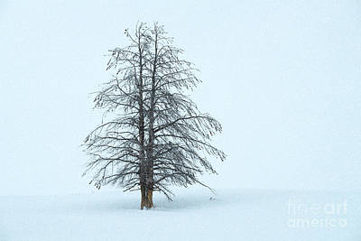 Photograph - Winter Beauty - Yellowstone National Park by Sandra Bronstein