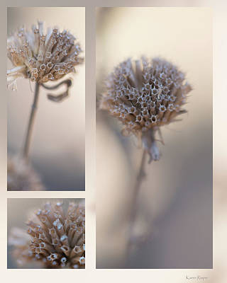 Photograph - Winter Bergamot by Karen and Phil Rispin