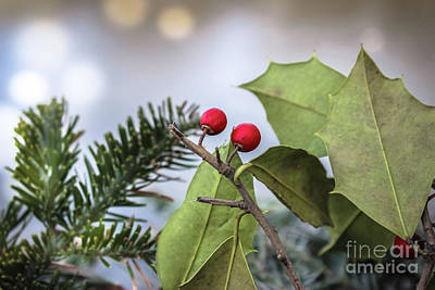 Photograph - Winter Berries by Colleen Kammerer