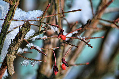 Photograph - Winter Berries by Mike Smale