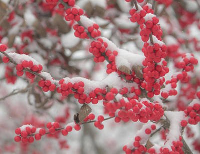Wild And Wacky Portraits - Winter Berries with First Snow Fall by Michael Saunders