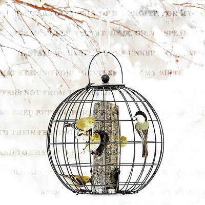 Photograph - Winter Bird Feeder  by Andrea Kollo