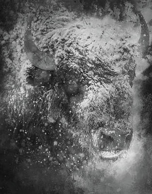 Photograph - Winter Bison by Gloria Anderson