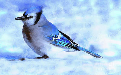 Painting - Winter Bluejay   ..digital Painting by Elaine Manley