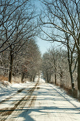 Photograph - Winter Canopy by Todd Klassy