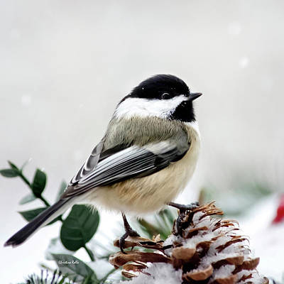 From The Kitchen - Winter Chickadee Square by Christina Rollo