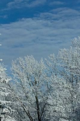 Photograph - Winter Day by Ann E Robson