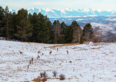 Photograph - Winter Deer Herd by Steve Krull