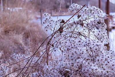 Photograph - Winter  Dry Flowers by Marina Usmanskaya
