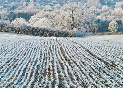 Winter Field, Little Rissington, Gloucestershire Art Print by David Ross
