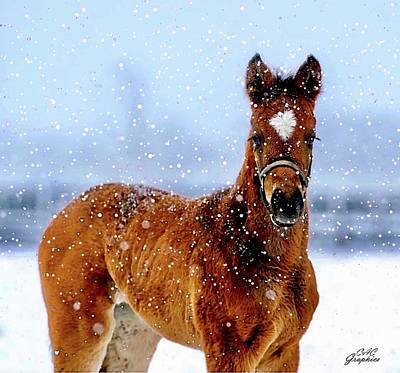 Painting - Winter Foal by CAC Graphics
