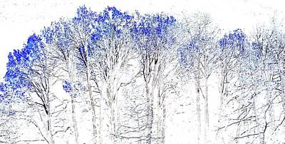 Photograph - Winter Forest by Marcia Lee Jones