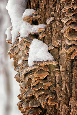 Photograph - Winter Growth by Travis Rogers