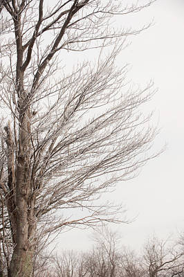Photograph - Winter Hoarfrost by Mark Duehmig