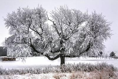 Photograph - Winter Hug by David Matthews