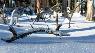 Photograph - Winter In The Upper Harz by Andreas Levi