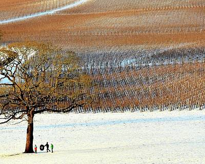 Photograph - Winter In The Vineyard by Jerry Sodorff