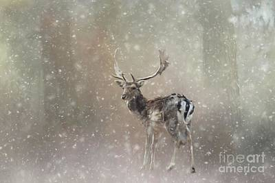 Winter In The Woods Art Print