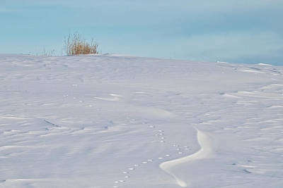 Wall Art - Photograph - Winter Landscape by Penny Meyers