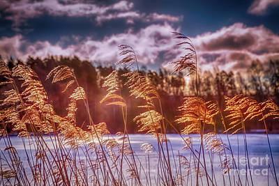 Wilderness Camping - Winter morning light 8 by Veikko Suikkanen