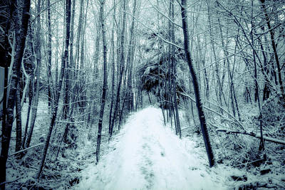 Photograph - Winter Morning Trail by Brett Nelson