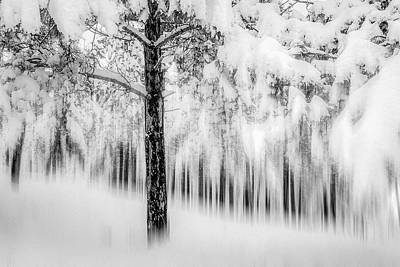 Photograph - Winter by Okan YILMAZ