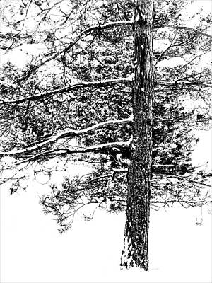 Digital Art - Winter Pine by Diane Chandler