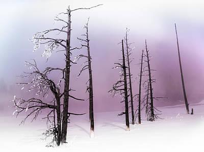 Photograph - Winter Rhapsody by Karen Wiles