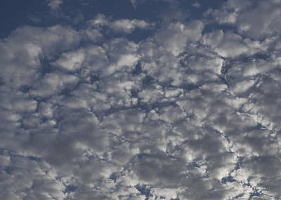 Rowing - Winter Seed Clouds by Richard Thomas