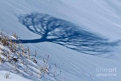 Photograph - Winter Shadow by Ann E Robson