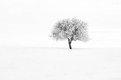 Photograph - Winter Silence by Mark Kiver
