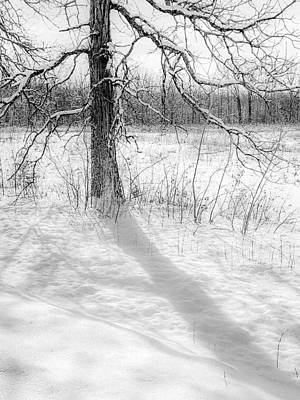 Photograph - Winter Simple by Kendall McKernon