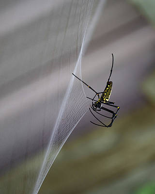 Photograph - Winter Spider by Chris Lord