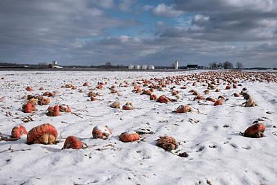 Photograph - Winter Squash by Mary Lee Dereske