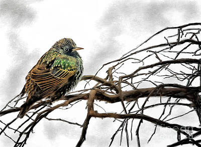 Digital Art - Winter Starling Waiting by Lois Bryan