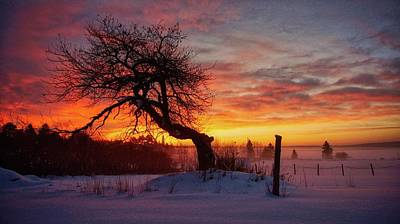 Photograph - Winter Sunrise On The Old Apple Tree by Bryan Smith