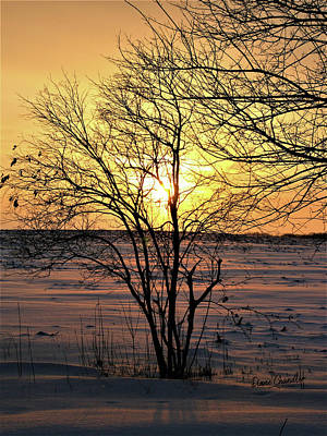 Photograph - Winter Sunset by Diane Chandler