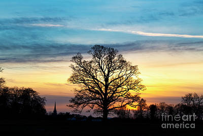Photograph - Winter Sunset Oak by Tim Gainey